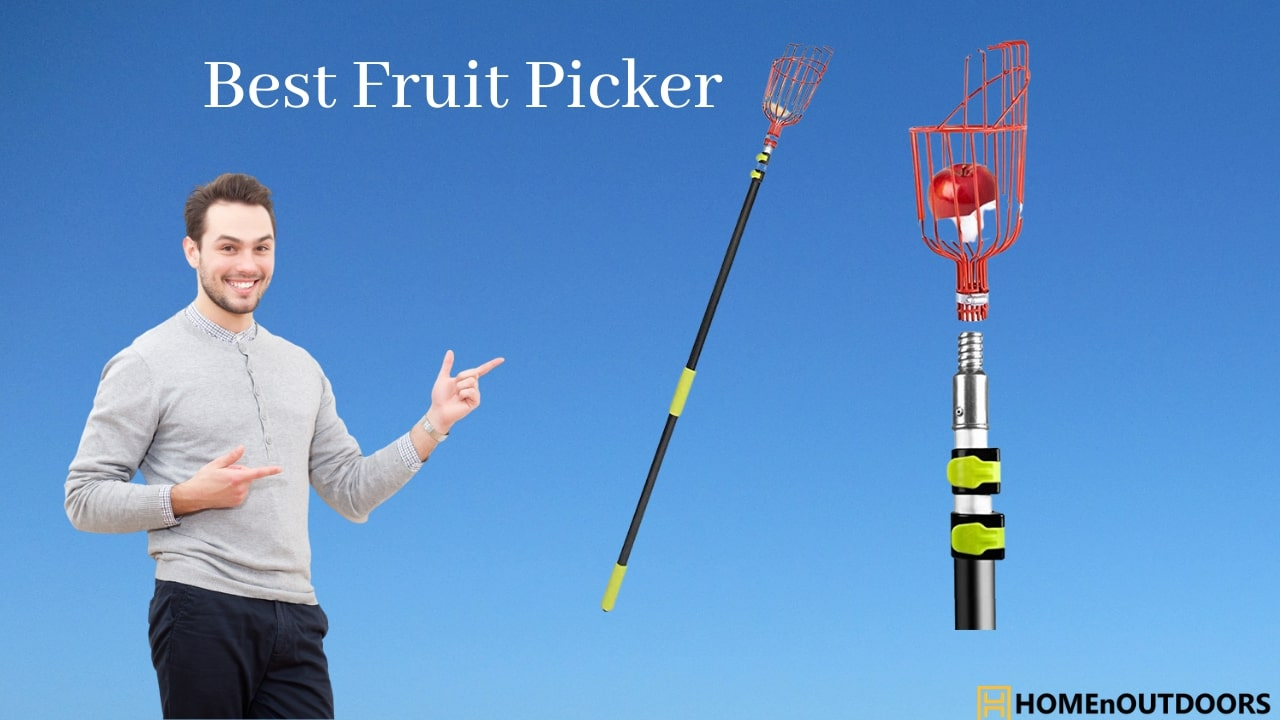 Best-Fruit-Picker