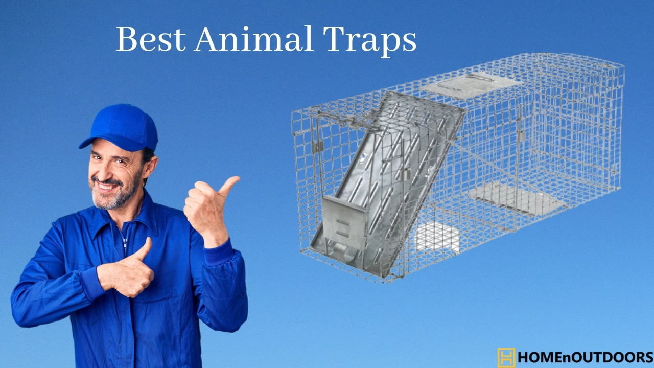 Best-Animal-Traps