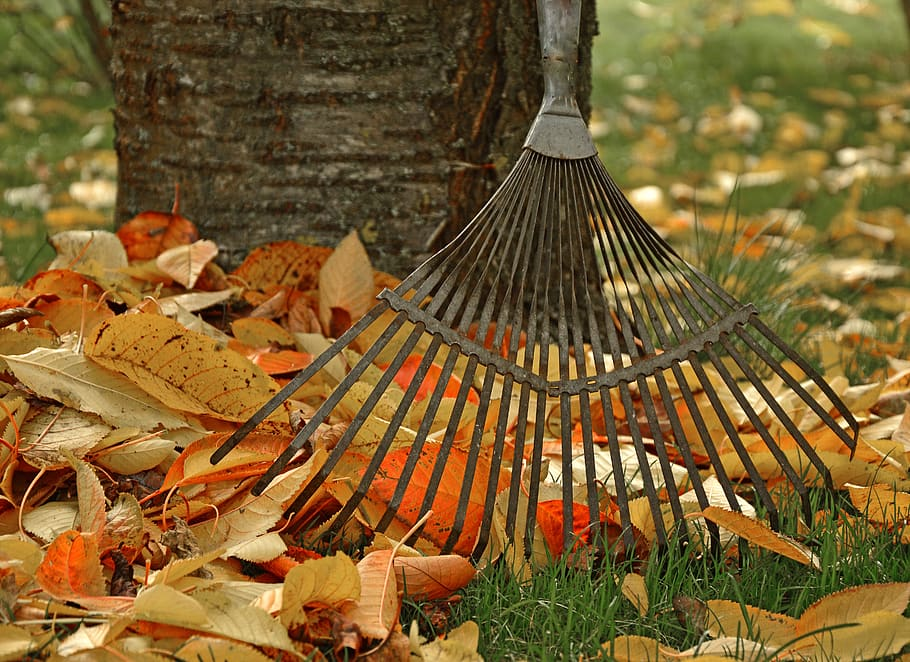 Cleaning a rake